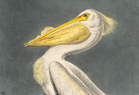 Audubon First Royal Octavo Edition
