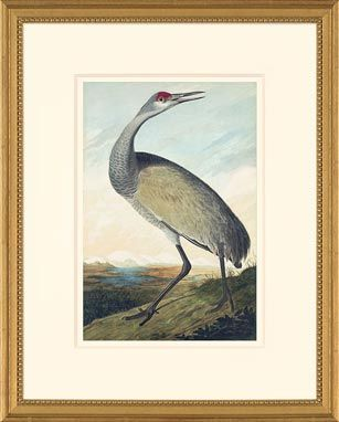 Audubon Watercolor Octavo Edition