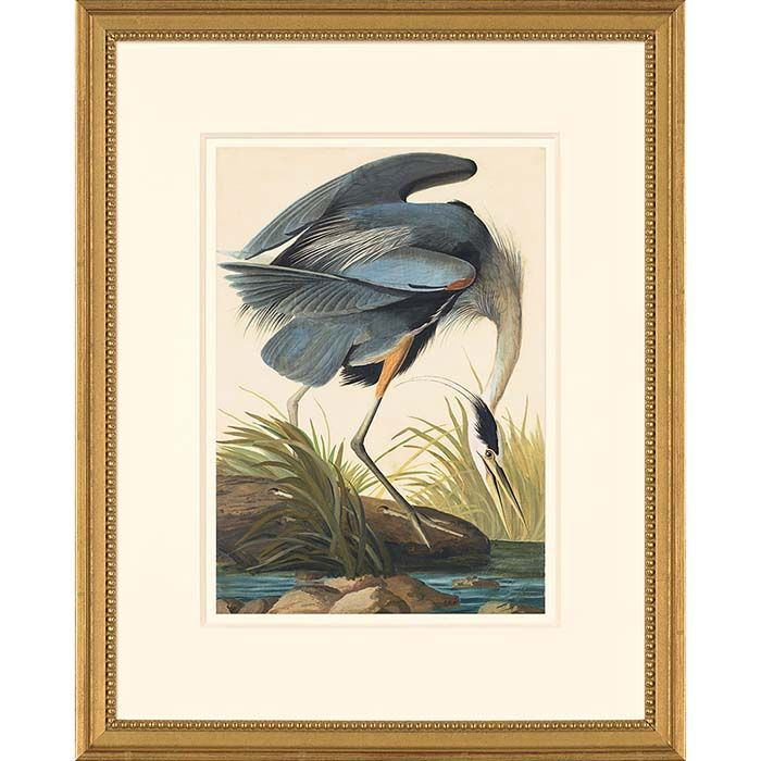 Audubon Octavo Watercolor Prints